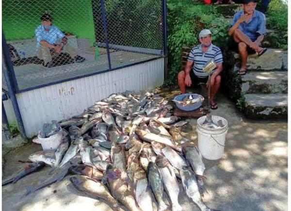 Local Fishermen Worry About False Claim In Fish Sale